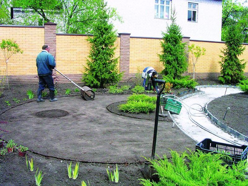 Как сделать газон правильно
