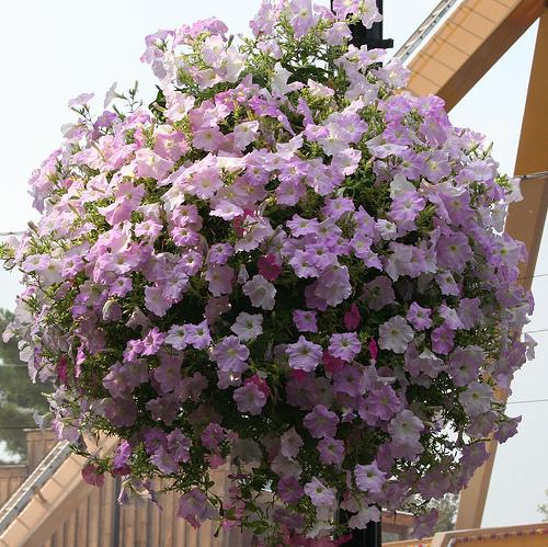 цветы из бумаги своими руками пошаговое фото легкие розы