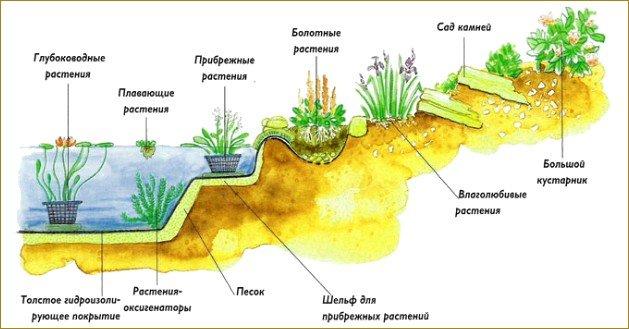 Растения для пруда схемы
