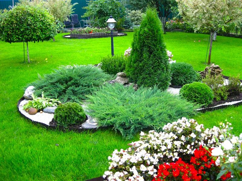 for Solo piante
