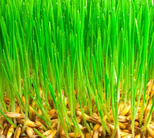 газонная трава green meadow отзывы