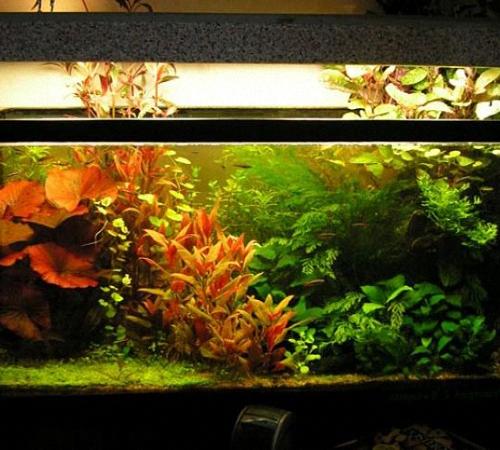 Освещения своими руками в аквариум