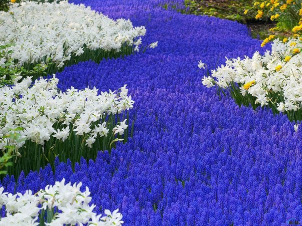 Цветы в голубых тонах