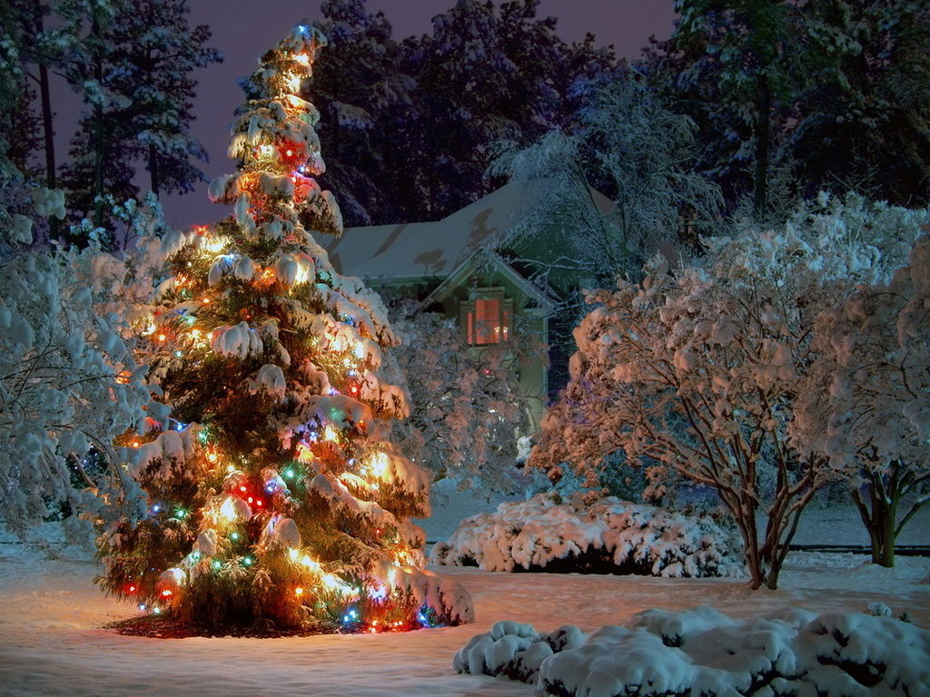 Christmas tree in