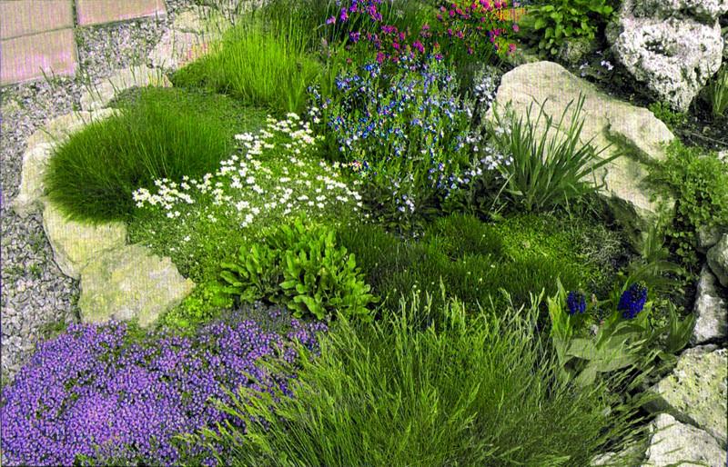 Среди зеленого фона травы