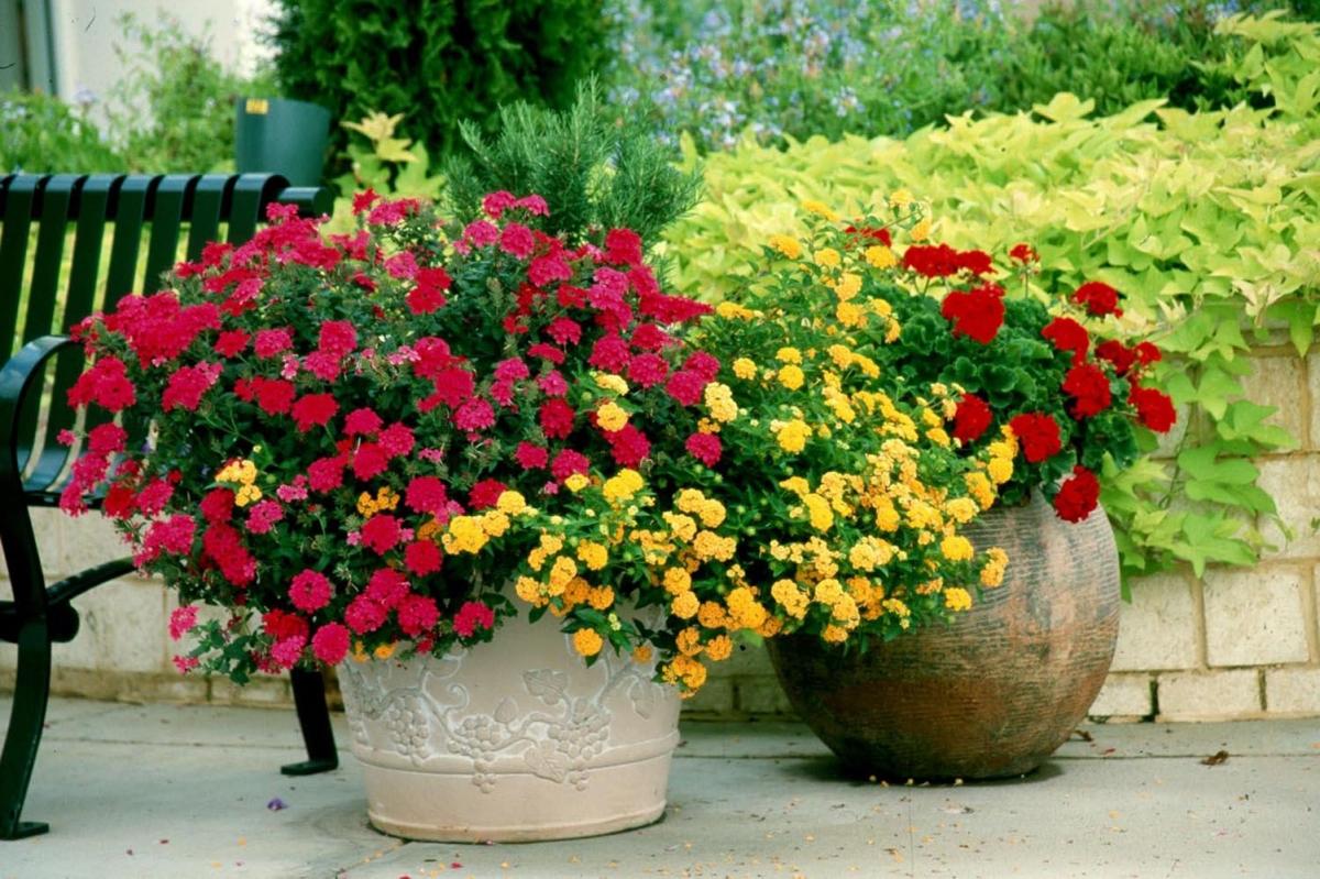 Какие цветы посадить на лето в кашпо