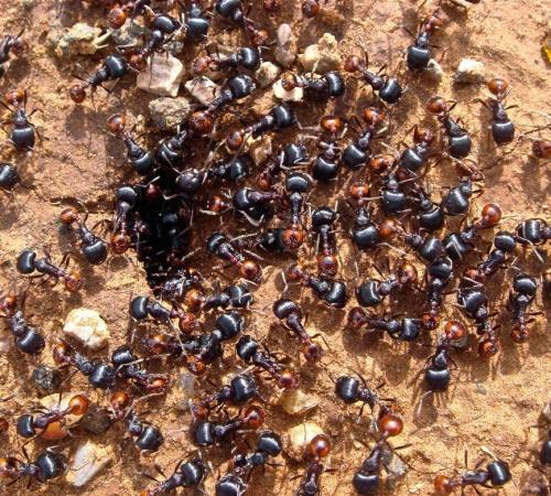 Как бороться с муравьями на садовом участке, Строительный портал