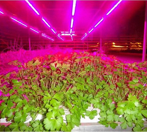 светодиодные лампы для теплицы зимой описание, фотографии, телефоны