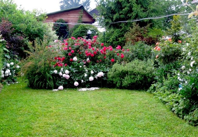 Подбор роз для посадки