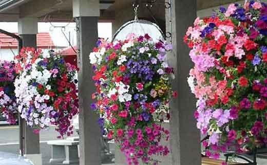 Цветы на даче летом: 70 фото с названиями многолетних и