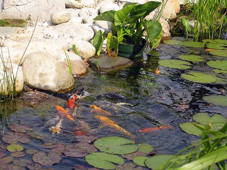 Сделать пруд своими руками для рыбы