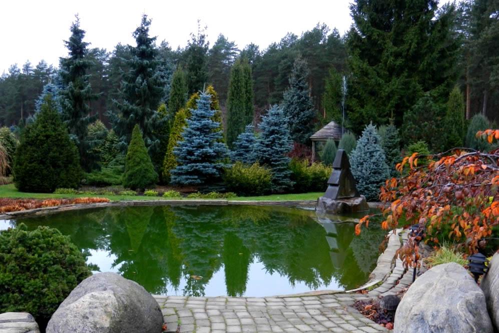 Хвойные растения для сада фото