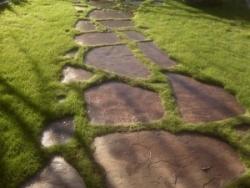 Дорожки из натурального дерева