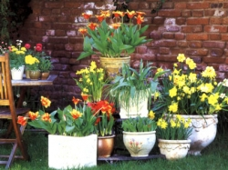Какие и как лучше посадить цветы в уличное кашпо Уют и
