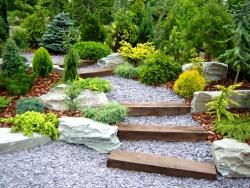 Хвойные растения для сада какие