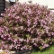 Уход за пчелами весной: особенности первого ухода, Строительный портал