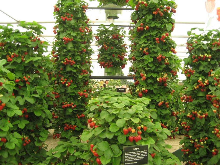 Вертикальная клубника выращивание 65