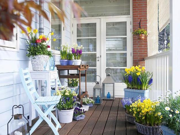 Цветы на балконе. Какие цветы на балконе посадить 85