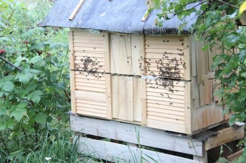 Сделать пчелиного улья своими руками фото 606