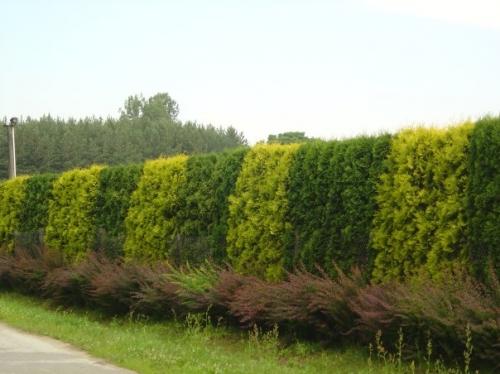 Многоярусная живая изгородь