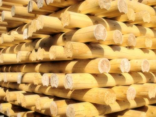 Выбор древесины для дома из оциллиндрованного бревна