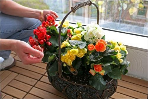 Какие цветы сажают в квартире 19