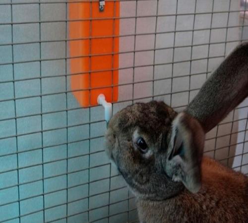 """Результат пошуку зображень за запитом """"поилки для кроликов своими руками"""""""