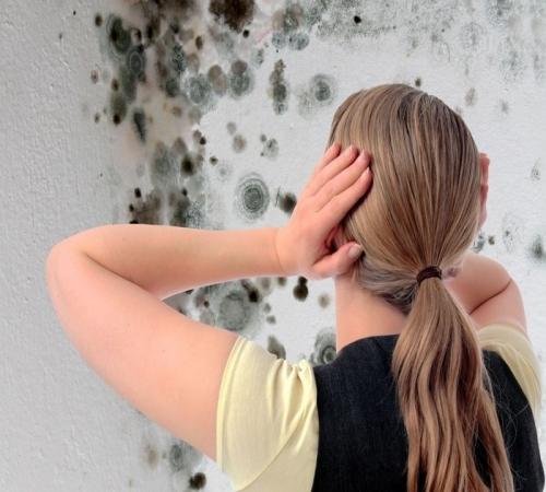 Картинки по запросу Основные способы как бороться с плесенью и грибком