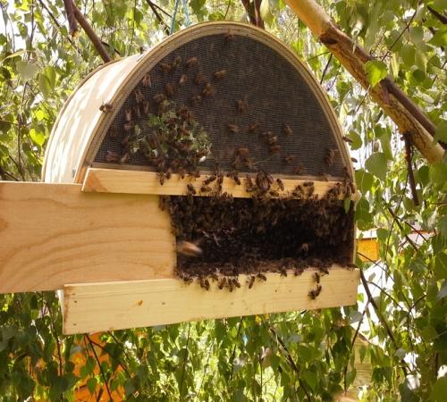 Картинки по запросу ловушку для пчел своими руками
