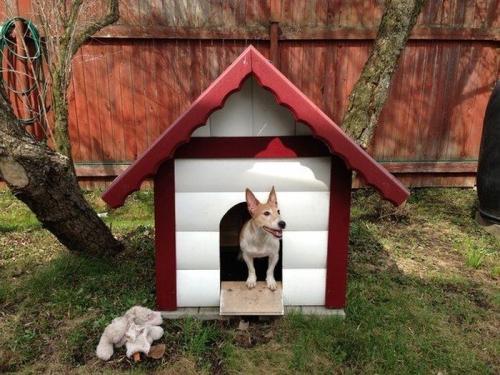 Как сделать будку для собаки своими руками в домашних условиях