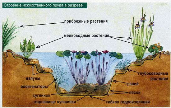 Как сделать пруд с рыбами на даче своими руками