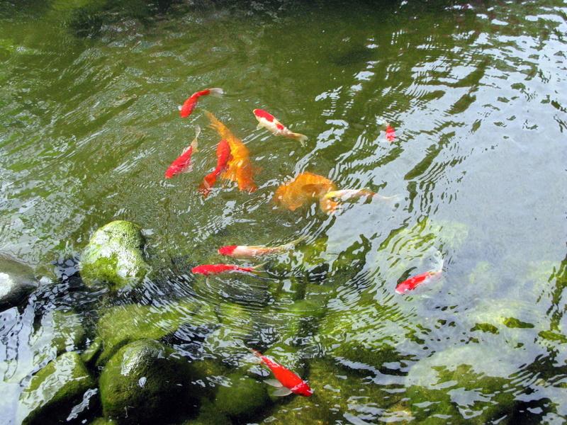 Искусственный пруд с рыбками